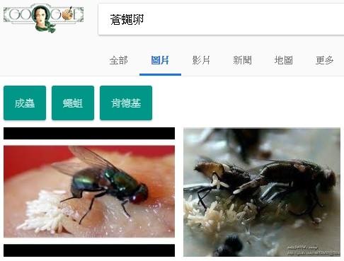 蒼蠅卵(圖擷取自Google)