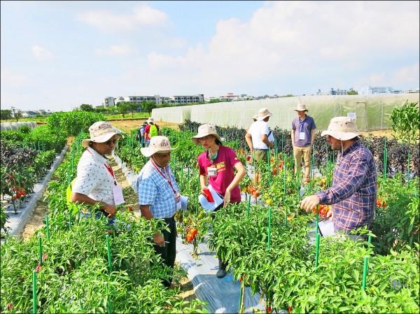 世界蔬菜中心善化總部昨舉行年度會議及田間觀摩,吸引國內外許多單位參與。(世界蔬菜中心提供)