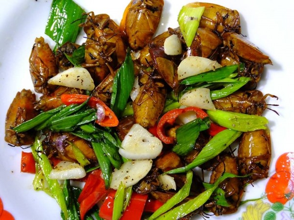 椿象在泰國1隻要價1泰銖(約台幣1元),是美味的佳餚。(圖擷取自隨想臉書)