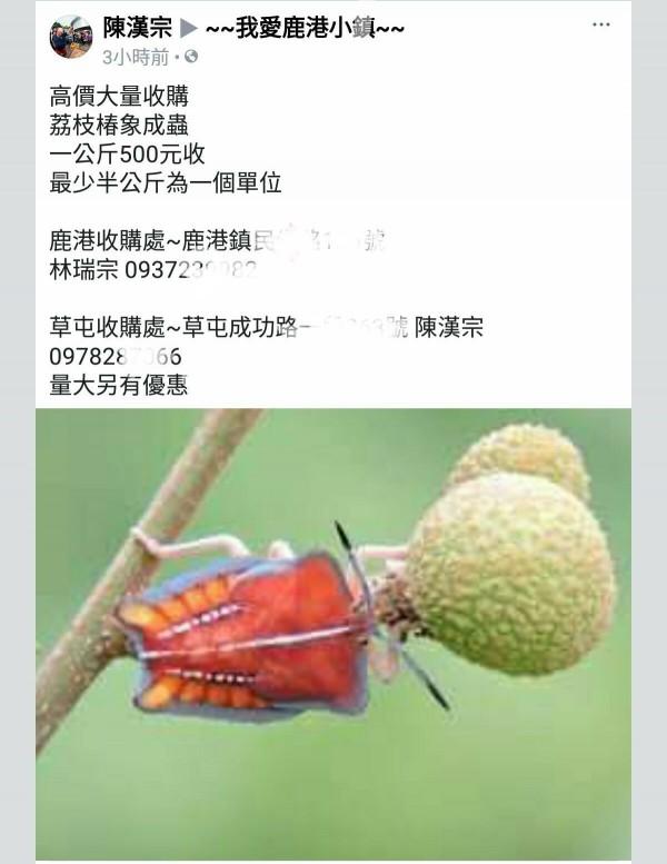 「米香哥」陳漢宗在多個臉書社團PO文,要高價收購荔枝椿象。(圖擷自臉書社團)
