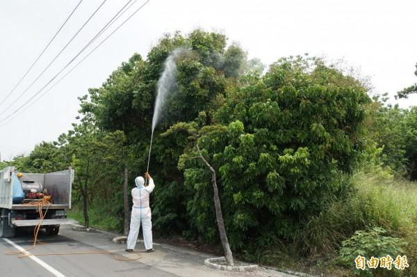 林內鄉噴藥預防小黑蚊,意外發現藥劑可殺荔枝椿象。(記者詹士弘攝)