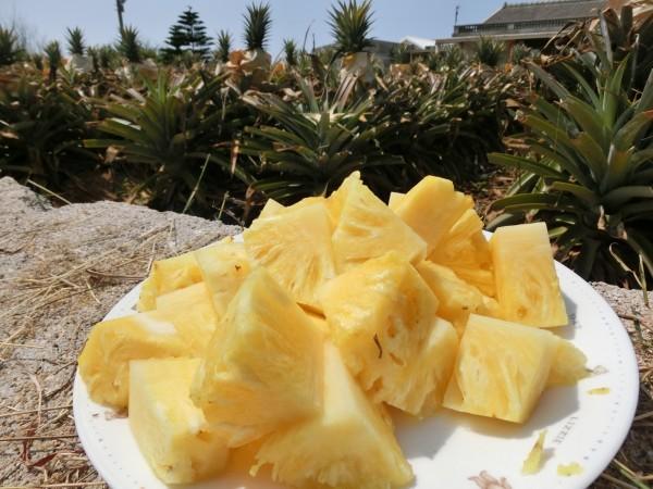 澎湖地區出產的鳳梨甜度高、纖維細嫩。(澎湖就業中心提供)