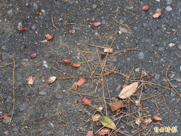花壇鄉公所在全鄉噴灑化學藥劑撲殺荔枝椿象,地面掉落大量被藥劑噴死的荔枝椿象,景象駭人。(記者湯世名攝)