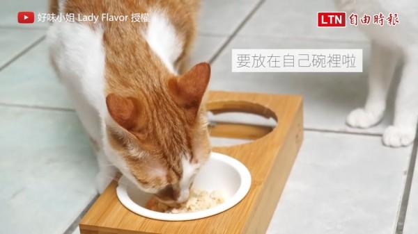 美味的「貓漢堡」讓貓咪一口接一口。(授權:好味小姐 Lady Flavor)