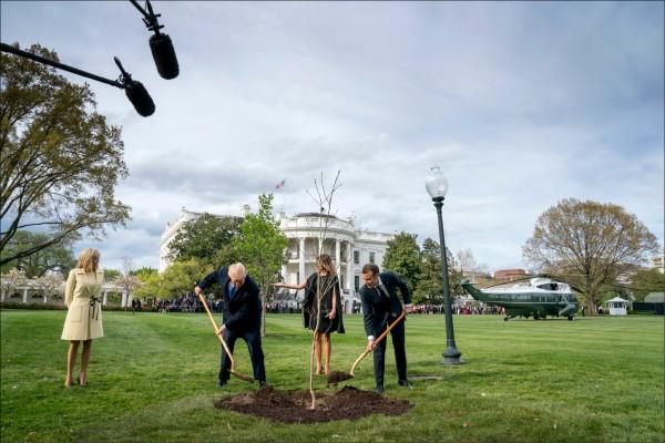 法國總統馬克宏(右一)上月23日前往美國進行任內初次國是訪問,並從法國帶了一棵橡樹苗,與美國總統川普(左二)合力種在白宮南草坪,以表美、法特殊情誼,法國第一夫人布莉姬(左一)與美國第一夫人梅蘭妮亞(右二)在旁樂觀其成。(美聯社)