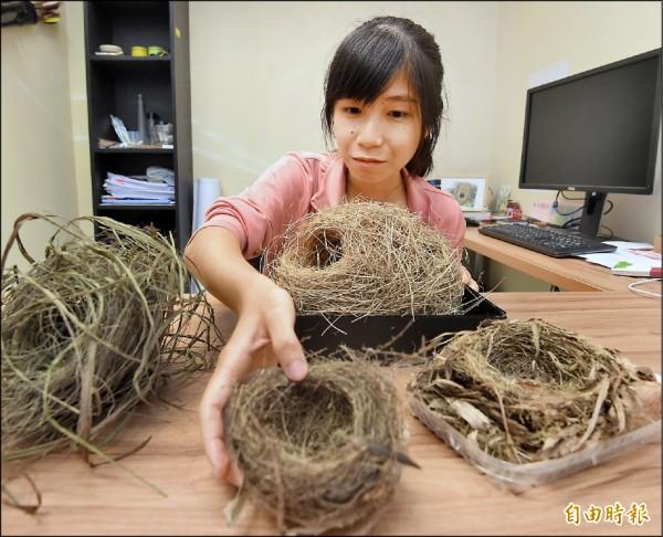 由中興大學大三生、21歲方怡婷任第一作者,關於鳥巢與鳥類演化方式之研究,5月份登上國際頂尖期刊「自然通訊」。(記者朱沛雄攝)