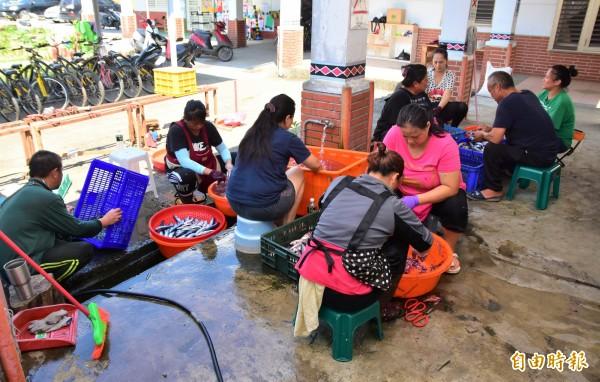 每年5至7月為飛魚產季,宜蘭縣東澳國小射箭隊家長每週2天,自發性到校處理飛魚,為孩子出國籌措經費。(記者張議晨攝)