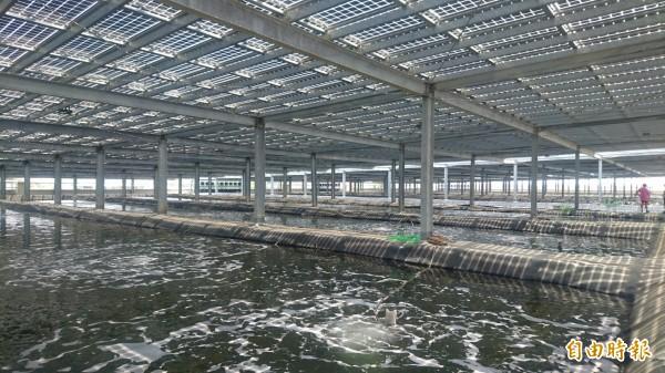 全國最大漁電共生室內白蝦養殖場在台南學甲,不僅養蝦也利用屋頂太陽能發電。(記者楊金城攝)