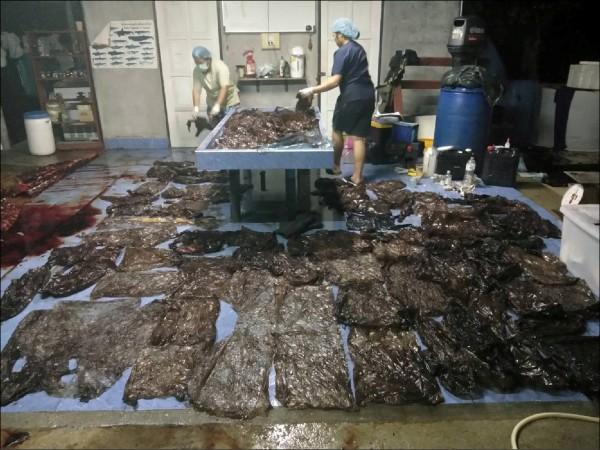 泰國當局對領航幼鯨進行解剖,從其肚腹內取出大量塑膠袋,令人怵目驚心。(路透檔案照)