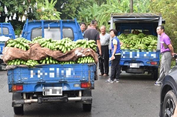 蕉農上午忙著載香蕉到集貨場交貨。(記者蘇福男攝)
