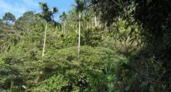 林務局烏來工作站主任林純徵表示,種植違規作物包括檳榔、果樹、柑橘、茶等非造林樹種,但是考量農民生計問題,因此也會要求均勻混植造林木。(立法委員吳琪銘辦公室提供)