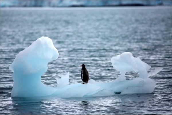 今年二月十八日,南極洋基灣出現一隻站在冰山上的企鵝。(路透檔案照)