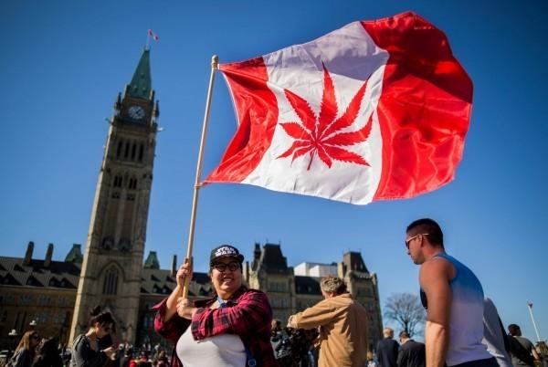 加拿大眾議院18日通過大麻合法化,不過之後該法案仍需給參議院通過,並由加拿大總督批准才能生效。該法案預計今年9月生效。(資料照,法新社)