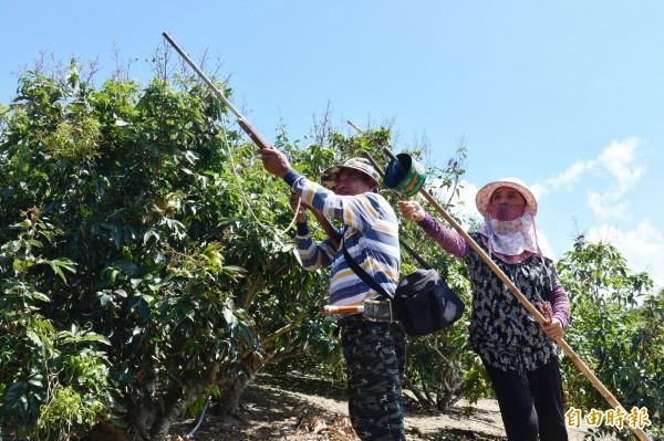 滿州「驅猴大隊」成立滿一個月。(記者蔡宗憲攝)