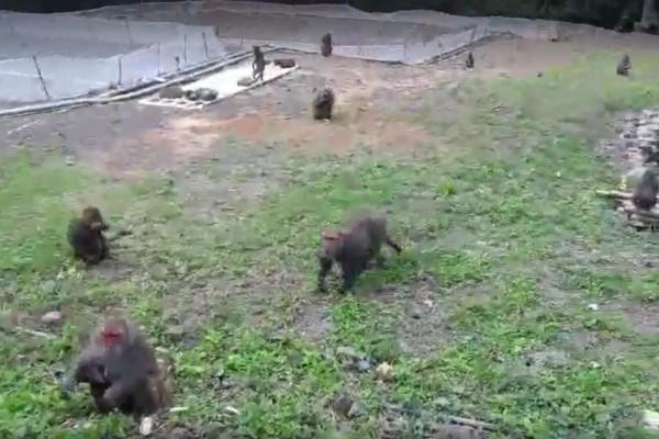 滿州近半年猴害嚴重。(記者蔡宗憲翻攝)
