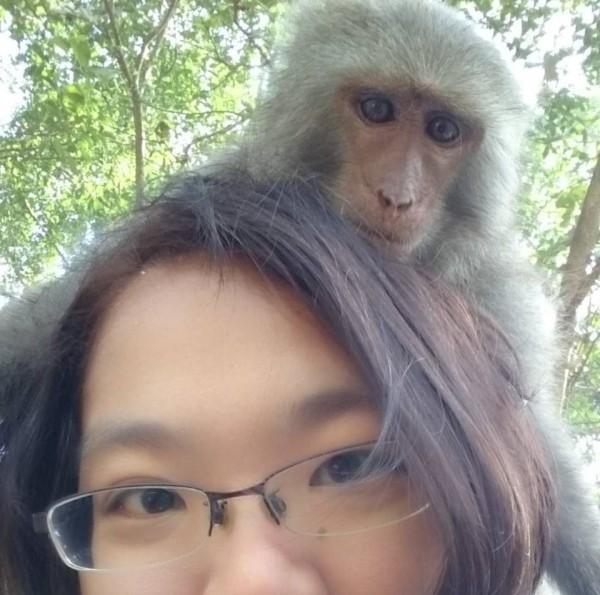 台灣獼猴從保育類除名,獼猴女博士林美吟感嘆獼猴黑暗時代來臨。(取自「林美美臉書」)