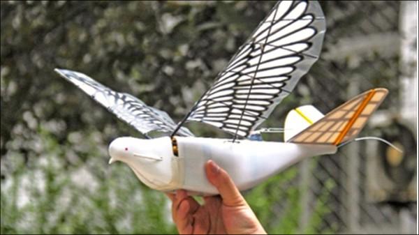 中國仿生無人機「信鴿」。(取自網路)
