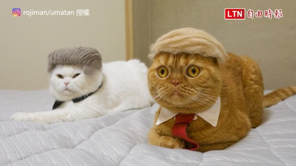 貓咪打扮成川普與金正恩的模樣。(授權:rojiman/umatan)