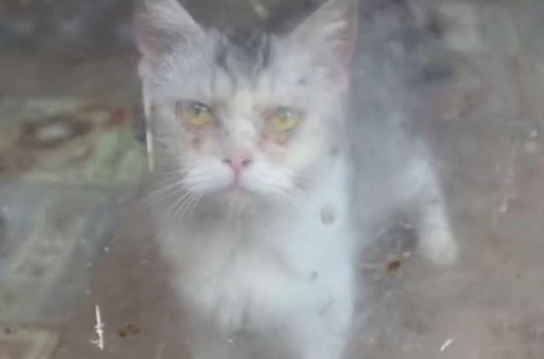中國湖北武漢一間倒閉的貓咖啡廳爆出虐貓事件。(圖擷自nG家的貓微博)