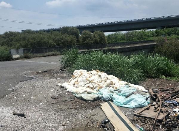 芳苑鄉漢崙橋旁遭丟棄上百隻死鴨,附近居民擔心有禽流感,恐造成更大環境汙染。(記者陳冠備翻攝)