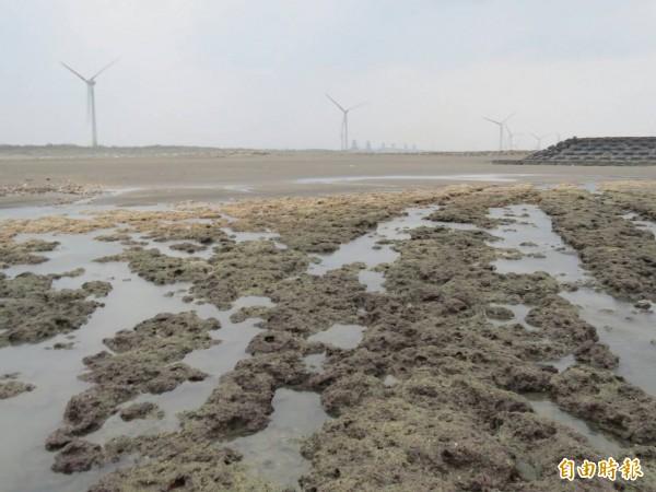 環評委員認為,觀塘工業港區、中油第三天然氣接收站開發案對藻礁(見圖)生態系有重大影響之虞,要求「退回目的事業主管機關」,等同於建議本案不通過,將提送環評大會審議。(資料照)