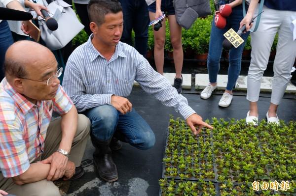 蘇貞昌走訪金山三界壇路三福宮旁青農種植杜鵑、茶花的農地,瞭解花農工作情形。(記者林欣漢攝)