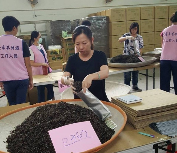新竹縣夏季東方美人茶比賽,今年由北埔鄉農會承辦,近期已收取報名參賽茶。(圖由北埔鄉農會提供)