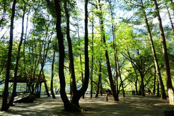 奧萬大森林遊樂區今天休園,颱風過後會先安檢後才開園。(圖由南投林管處提供)