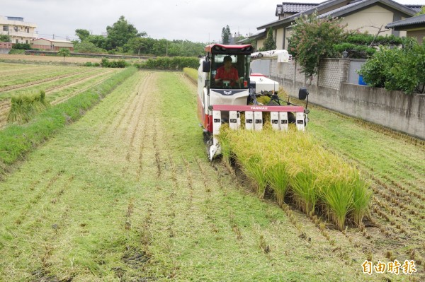 颱風來勢洶洶,稻農忙收割 、「苗栗新中橫」封閉。(記者蔡政珉攝)
