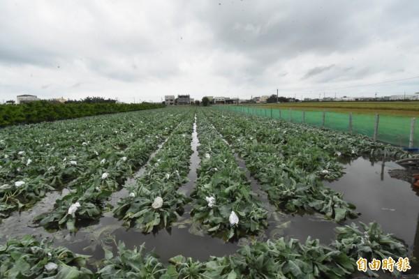 瑪莉亞颱風已走,彰化縣平安渡過,但0702豪雨重創農田,農田傷得不輕。(記者張聰秋攝)