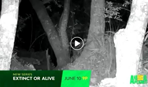動物星球頻道最新一期《滅絕動物大追蹤》,節目團隊來到台灣尋找台灣雲豹的蹤跡,並宣稱在玉山拍到台灣雲豹的身影。不過有網友踢爆,該畫面明明就是在非洲坦尚尼亞所拍攝的非洲豹。(翻攝自zanzibarleopard)