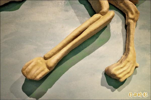 黑熊骨骼模型的熊掌,前後腳掌的五趾全部連在一起,看起來不像熊掌、倒像是鴨掌;黃美秀則酸「這是Q版熊掌」?(記者花孟璟攝)