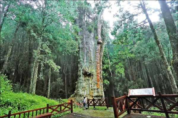 林務局轄下森林遊樂區預定十二月將開放「行動支付」購買門票,不用帶現金或信用卡,用手機就可購票入園;圖為阿里山森林遊樂區。(資料照)
