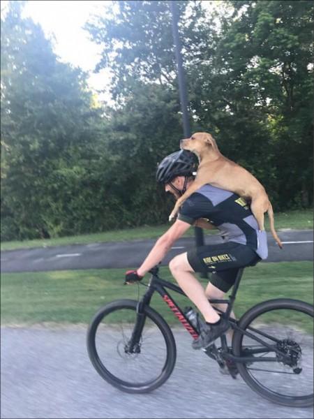 里托揹載受傷的流浪狗,他的行動改變了狗狗的生命。(取自網路)