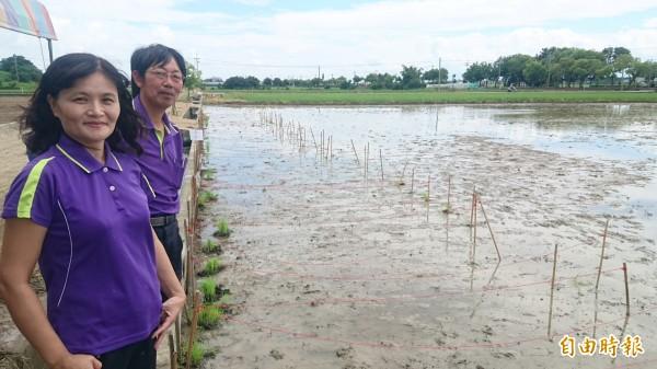 新東國小實驗田栽種教學研究樣本稻45個品種,校長林秋美(左)、老師李榮宗(右)滿意。(記者楊金城攝)