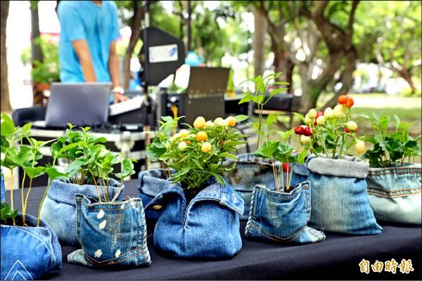 破舊牛仔褲化身低碳盆栽,新竹市號召市民回收舊衣再利用。(記者蔡彰盛攝)