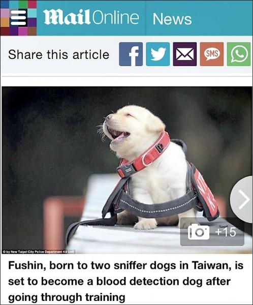 姬生一拍攝的警犬萌照,登上英國每日郵報網頁。 (記者吳昇儒翻攝)