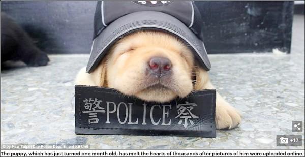 姬生一拍攝的警犬隊幼犬照登上英國每日郵報版面。(翻攝自每日郵報網頁)