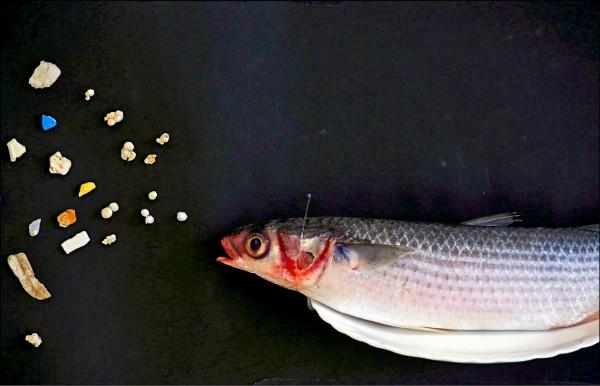 綠色和平組織(Greenpeace)4月23日在香港召開記者會,展示在當地水域發現的鯔魚及其體內的塑膠微粒。(路透檔案照)