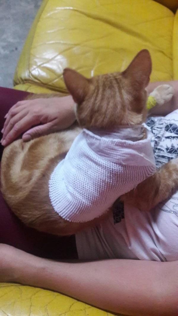 「橘子」就醫後,在家休養。(記者彭健禮翻攝)