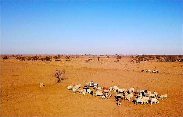澳洲新南威爾斯州政府八日宣佈,當地已全州進入旱災狀態,意即一百%土地均為乾旱所苦。圖為新州沃爾格特(Walgett)的旱象。(路透)
