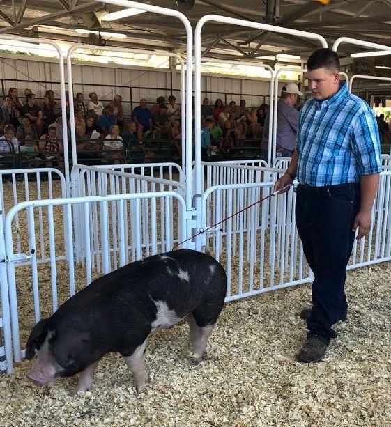 美國印地安那州埃文斯維爾1名15歲的男孩,最近因為拍賣了1隻豬而聲名大噪,265磅(約120公斤)重的豬,竟然拍出了4次,總共賣得了1萬70美元(約新台幣31萬元)。(圖擷取自推特)