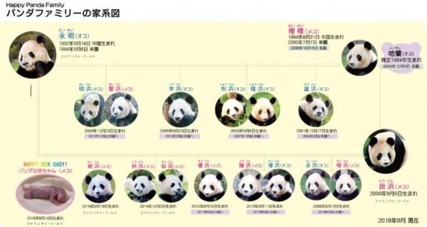 園區也在網上公布熊貓的族譜。(圖片擷取自白浜冒險世界主題樂園官網)