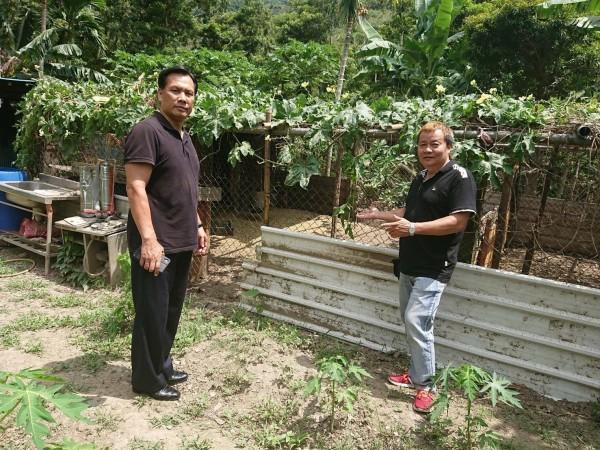 胡傳明(左)在澳花部落上村一帶,商借空地養雞,平常由派出所志工負責餵養,若村里有病民,所長雞就成了最好補品。(記者張議晨翻攝)