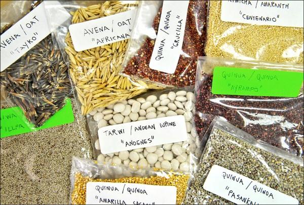 美國最新研究顯示,飲食中應有五成碳水化合物以保長壽。圖為南美洲出產的「超級食物」,富含多種穀類。(法新社檔案照)
