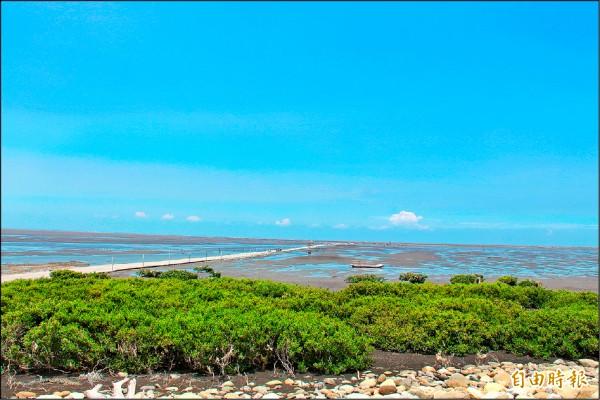 彰化海岸擁有全國獨一無二的泥質河口生態潮間帶。(記者陳冠備攝)