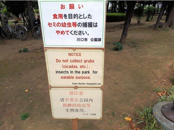 看板上寫著「請不要在公園內抓蟬的幼蟲等生物食用」,在推特上引起一股討論,路過公園的阿伯也說:「沒看過也沒聽說有人抓來吃,很好奇誰會吃。」(圖擷取自朝日新聞)