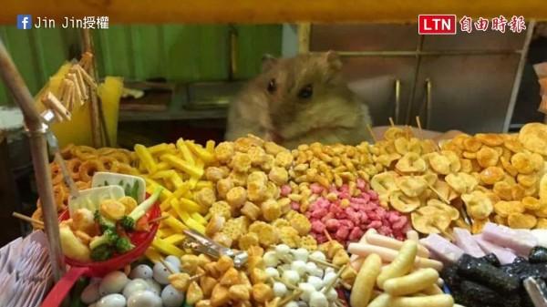 Jin Jin所製作的微縮鹹酥雞攤與寵物倉鼠合照,造成網友瘋狂討論、轉發。(授權:Jin Jin)