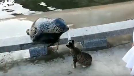陸地動物好兇......海豹好奇嗅嗅 被喵星人狠摑2巴掌