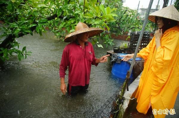 南台灣大雨讓屏東的果園泡在水裡。(記者陳彥廷攝)